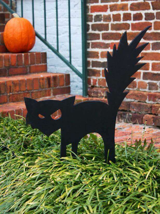 Startled Stray Cat