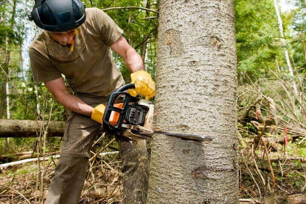 7 Tips To Cut Down Trees Without Compromising Personal Safety