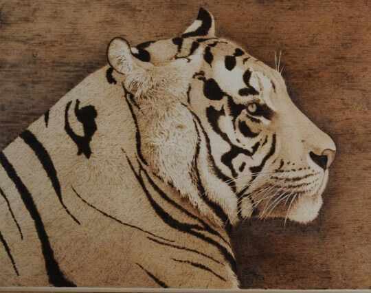 Bengal Tiger Pyrography