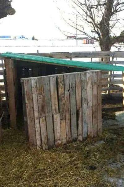 DIY Pallet Goat House