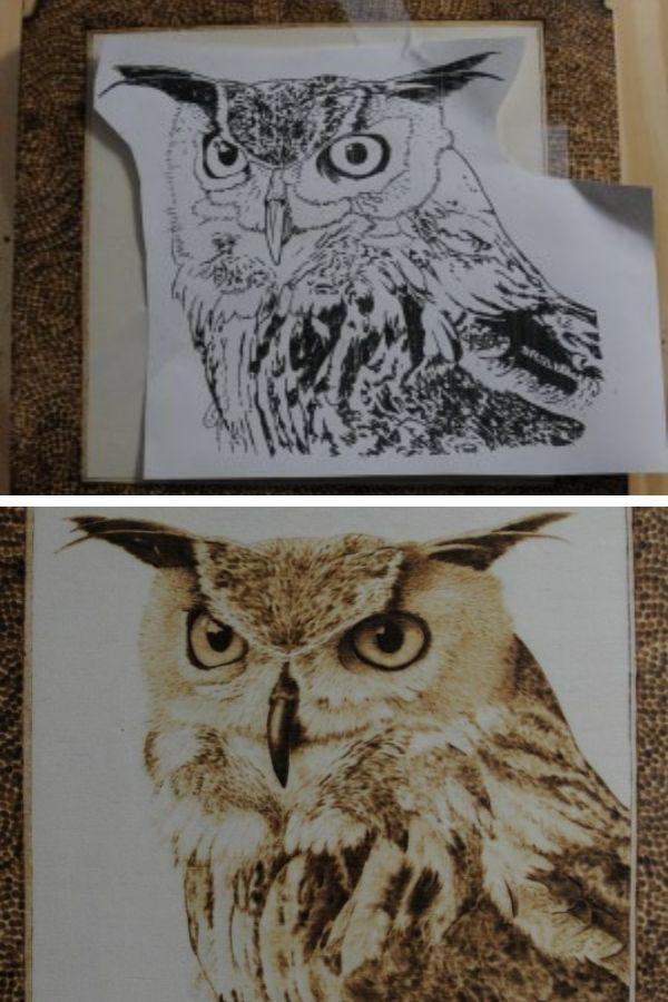 Hawk Owl Pyrography