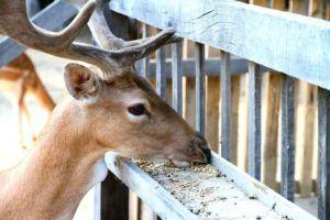 DIY Deer Feeder Plans