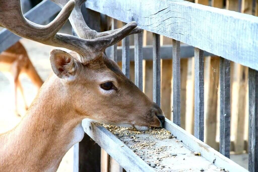 21 DIY Deer Feeder Plans You Can Build
