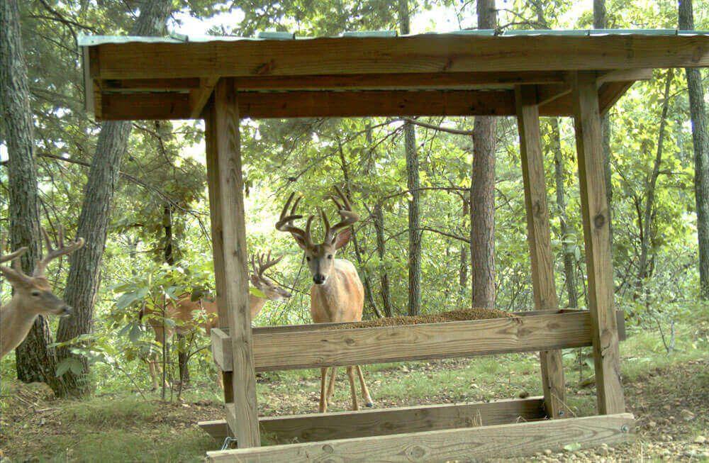 5. DIY Trough-Style Deer Feeder